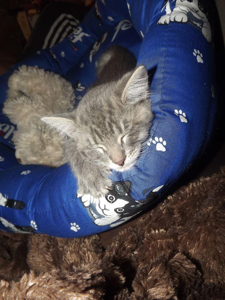 kitty-Frederik-7