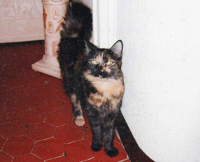Minette-PDC