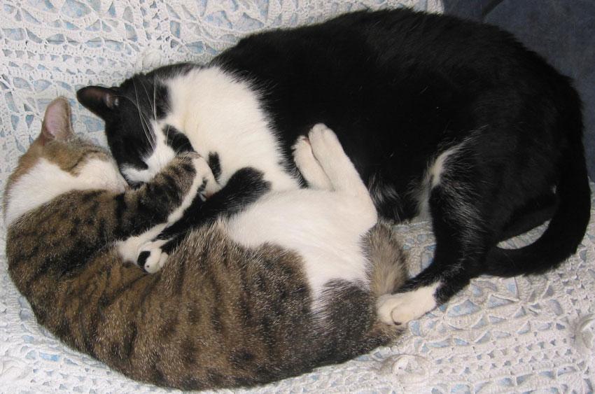 Chat villenave dornon